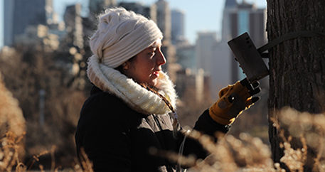Zoo scientist installing a motion-activated field camera in Chicago