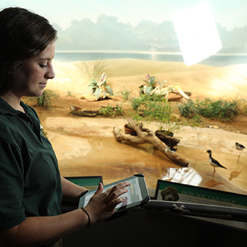 Zoo scientist observing birds in exhibit