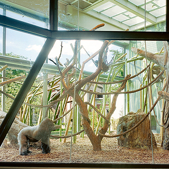 Regenstein Center for African Apes